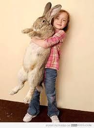 Rabbit girl assignment